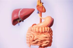 types of liver transplants
